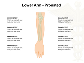 Upper Limb backgrounds for power point
