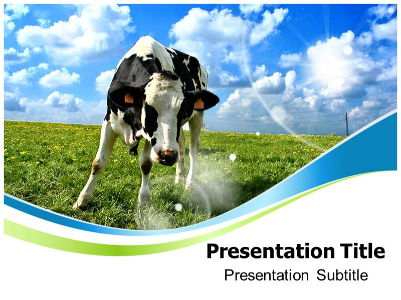 cow powerpoint templates powerpoint template on cow cow