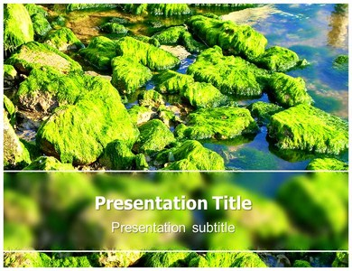 Algae Powerpoint Templates