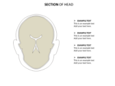 Head Neck background PowerPoint Templates