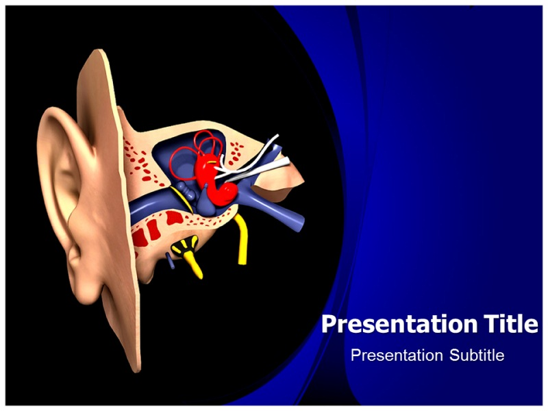 Ear Anatomy Model Powerpoint Templates Powerpoint Presentation On
