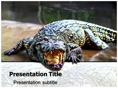 Crocodile Powerpoint Templates