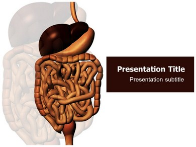 Digestive system Powerpoint Templates