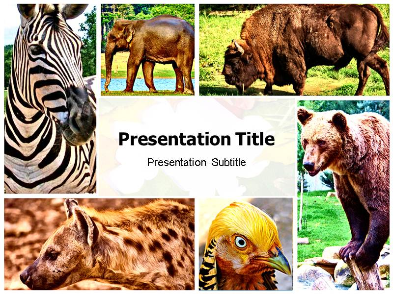 zoology (ppt) powerpoint template | zoology themes | zoology, Modern powerpoint