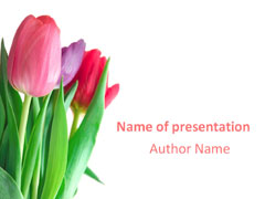spring tulips powerpoint templates, tulip flowers ppt backgrounds, Modern powerpoint