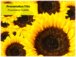 sunflower powerpoint-template