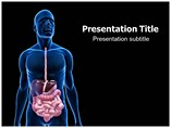 Digestive System Powerpoint Graphics