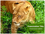 Forest And Wildlife Powerpoint Template
