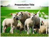 Sheep Farming Powerpoint Template
