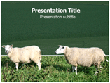 Sheep Breed Powerpoint (PPT) Templates