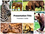 Forest Animals Powerpoint Theme