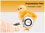 Poultry Disease PPT Template