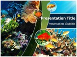 Coral  Powerpoint Templates