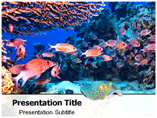 Marine Life PowerPointTemplates