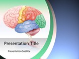 Brain Anatomy - PPT Template