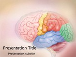 Brain - PPT Template