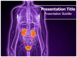Urology PowerPoint Templates