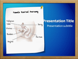 female genital anatomy Powerpoint Templates