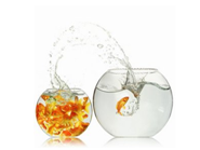 Goldfish Bowl PowerPoint Templates