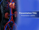 Cardiovascular System Template PowerPoint