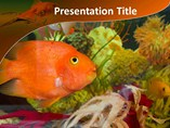 Animal powerpoint templates-Aquarium