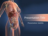 PPT Templates for Woman Anatomy