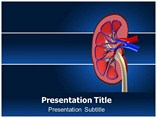 Human Kidney Template PowerPoint