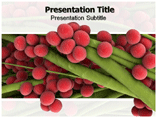 Staphylococcus Powerpoint Templates