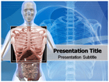 Thorax Powerpoint Templates