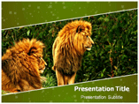 Save Lion PowerPoint Templates