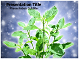 Medicinal plant PowerPoint Templates