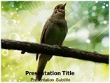 Nightingale Bird PowerPoint Slide