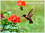 Flowers with Birds Powerpoint Templates