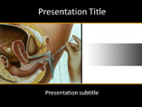 Free PPT Templates Download Uterus