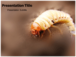 Maggot powerpoint template
