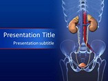 Medical powerpoint template - Urinary