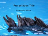 Animal powerpoint templates-Dolphin