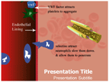 Endothelial Dysfunction PowerPoint Slide