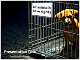 animal rights powerpoint template
