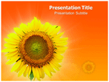 Sunflower Facts Template PowerPoint