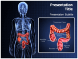 Inflammatory Bowel powerpoint template