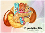 Abdominal Anatomy powerpoint template