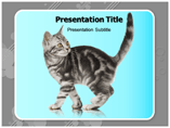 Kitten powerpoint template