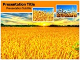 Wheat Field PowerPoint template