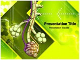 Alveoli powerpoint template