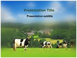 Animal powerpoint templates-Cow in the Meadow