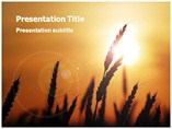 Powerpoint Templates for Wheat Field