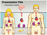 Endocrine System PowerPoint Template