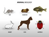 Animal Biology