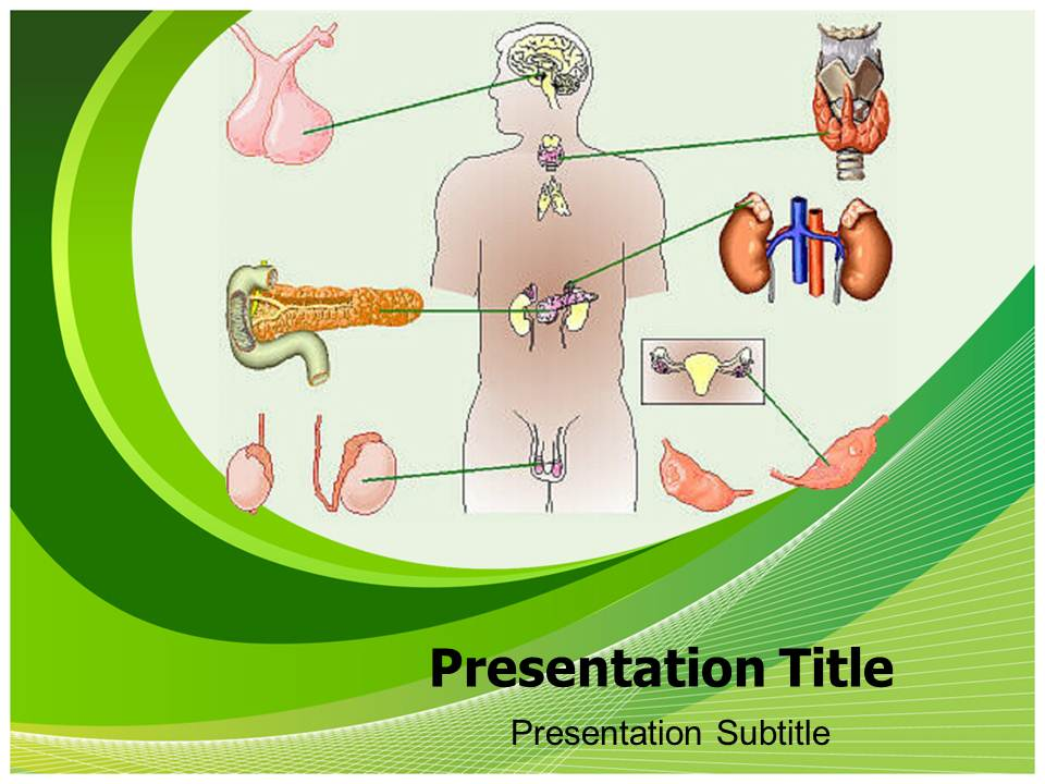 Endrocrine System Medical powerpoint templates